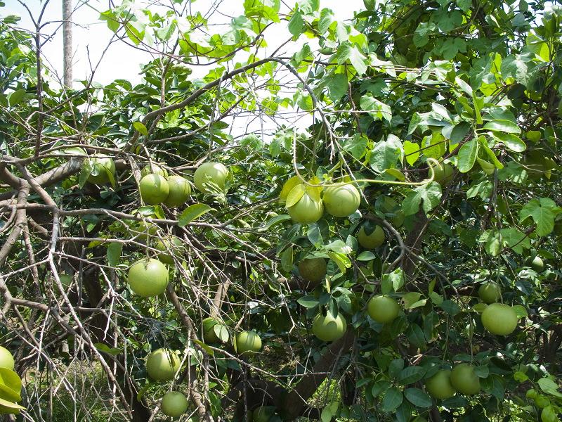 California crop harvest calendar - When fruit and ...